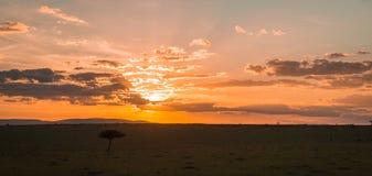 Afrykanina krajobraz z drzewem przy zmierzchem w Kenja Obraz Royalty Free