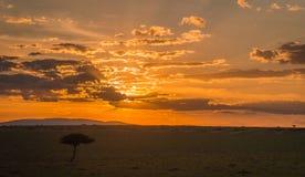 Afrykanina krajobraz z drzewem przy zmierzchem w Kenja Zdjęcia Stock