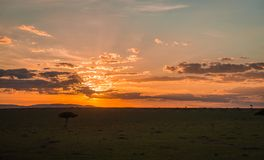 Afrykanina krajobraz z drzewem przy zmierzchem w Kenja Fotografia Stock