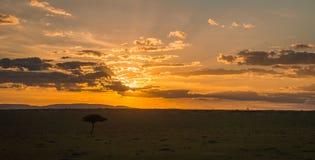 Afrykanina krajobraz z drzewem przy zmierzchem w Kenja Fotografia Royalty Free