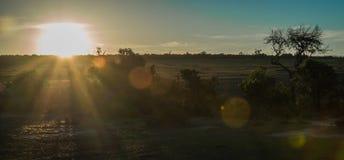 Afrykanina krajobraz z drzewem przy zmierzchem w Kenja Zdjęcie Royalty Free