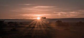 Afrykanina krajobraz z drzewem przy zmierzchem w Kenja Obrazy Royalty Free