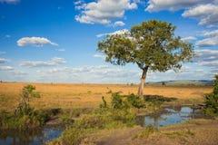 Afrykanina krajobraz z drzewnym Kenja Zdjęcia Royalty Free