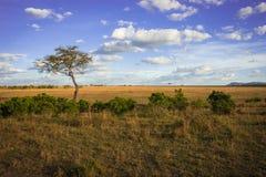 Afrykanina krajobraz z drzewnym Kenja Fotografia Stock