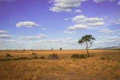 Afrykanina krajobraz z drzewnym Kenja Obraz Royalty Free