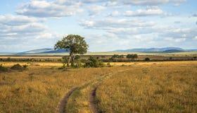 Afrykanina krajobraz z drzewnym Kenja Obrazy Royalty Free