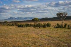 Afrykanina krajobraz z drzewnym Kenja Fotografia Royalty Free