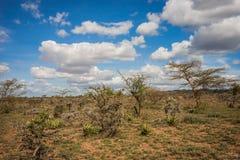Afrykanina krajobraz z drzewnym Kenja Zdjęcia Stock