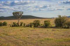 Afrykanina krajobraz z drzewnym Kenja Obraz Stock
