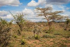 Afrykanina krajobraz z drzewnym Kenja Zdjęcie Stock