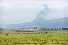 Afrykanina krajobraz z gazelami i wulkanem, Tanzania Obraz Royalty Free