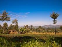 Afrykanina krajobraz z grupą drzewa  Zdjęcie Stock