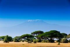 Afrykanina krajobraz z Kilimanjaro górą Fotografia Royalty Free