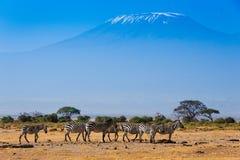 Afrykanina krajobraz z Kilimanjaro górą Obrazy Royalty Free