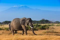 Afrykanina krajobraz z Kilimanjaro górą Fotografia Stock