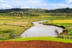 Afrykanina krajobraz z rzecznym bieg przez ryżowych poly Fotografia Stock
