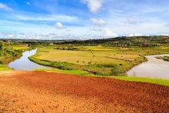 Afrykanina krajobraz z rzecznym bieg przez ryżowych poly Zdjęcie Stock