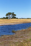 Afrykanina krajobraz z rzeką Fotografia Royalty Free