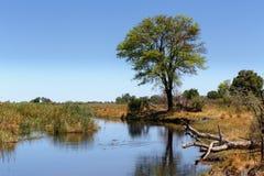 Afrykanina krajobraz z rzeką Obrazy Stock