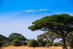 Afrykanina krajobraz z słoniami i Kilimanjaro górą Obrazy Royalty Free