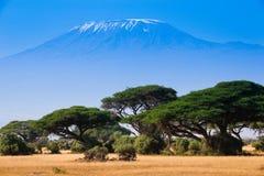 Afrykanina krajobraz z słoniami i Kilimanjaro górą Zdjęcia Stock