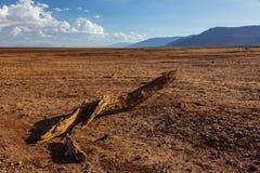 Afrykanina krajobrazowy widok Manyara jezioro w porze suchej Zdjęcie Royalty Free