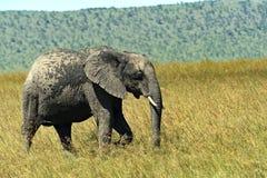 Afrykanina Samburu park Obraz Royalty Free