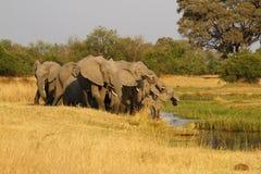afrykanina target727_0_ słoni stado Zdjęcia Royalty Free