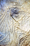 afrykanina zamknięta słonia tekstura zamknięty Zdjęcie Royalty Free