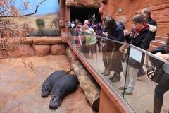 Afrykarium在弗罗茨瓦夫动物园里 库存照片