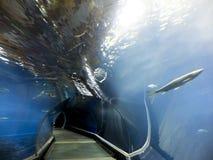 Afrykarium objekt som framlägger det livgivande vattnet av Afrika Royaltyfri Fotografi