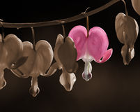 Aftappende hartbloem Royalty-vrije Stock Afbeelding