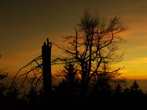 Afted dusk. Trees after dusk (Czech republic Stock Photography