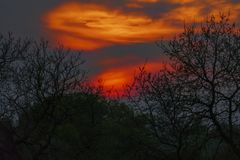 Afterglow, sundown with silhouette of trees. In red, orange, yellow royalty free stock photo