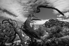 Afterlife in Joshua Tree Royalty Free Stock Photo