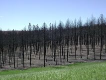 Aftermath of 2000 Jasper Fire Royalty Free Stock Photo