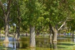 Aftermath of Monsoon Rain, Phoenix, AZ Stock Photos