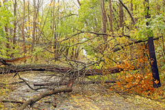 Aftermath of the storm. Downed trees and powerlines and broken branches along with blocked roads are some of the dangers and inconvenience and devastation in the stock images