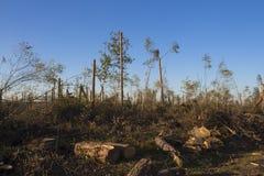 Aftermath tornado Belarus Royalty Free Stock Images