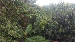 Afternoo van liefde natuurlijke groene clourfull stock afbeelding