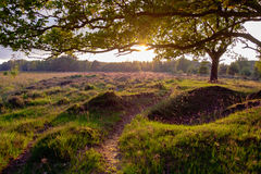 Free Afternoon At Dwingelderveld Royalty Free Stock Photography - 97144147