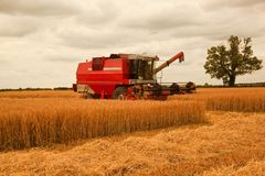 Afternoon Barley Harvest Stock Photography