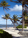 Afternoon Beach. Palm lined beach on a Caribbean island in the afternoon Royalty Free Stock Images