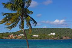 Afternoon breeze brought relief from heat into a small bay on St. Thomas, Virgin Islands US. Forest landscape on the hills of tropical island and a bended palm stock photo