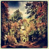 Afternoon drive on a sunny fall day in Michigan. Afternoon day Michigan Fall beautiful leaves Royalty Free Stock Photos
