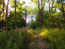 Afternoon Forest Path Stock Images