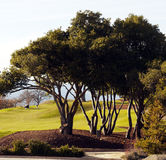 Afternoon golfing Royalty Free Stock Photography