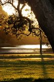 Afternoon light Royalty Free Stock Photography