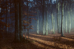 Afternoon light in foggy forest. Gloomy dark autumn day. Filtered image Stock Photos