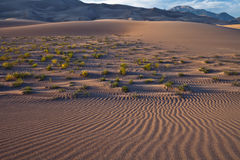 Afternoon light at the Great Sand Dunes National Park. Royalty Free Stock Image